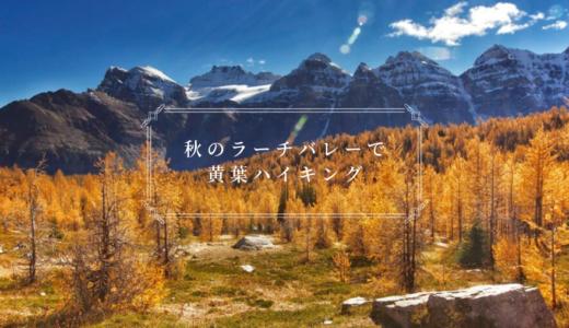 ラーチバレーで秋の黄葉ハイキング|バンフから行ける人気のトレイルです【登山・トレッキング情報】